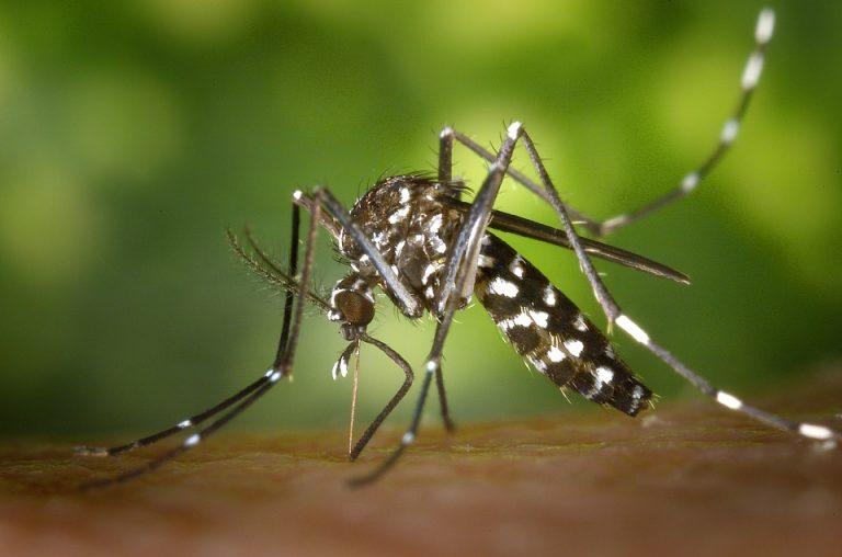 Les moyens d'éradication des insectes dits nuisbles